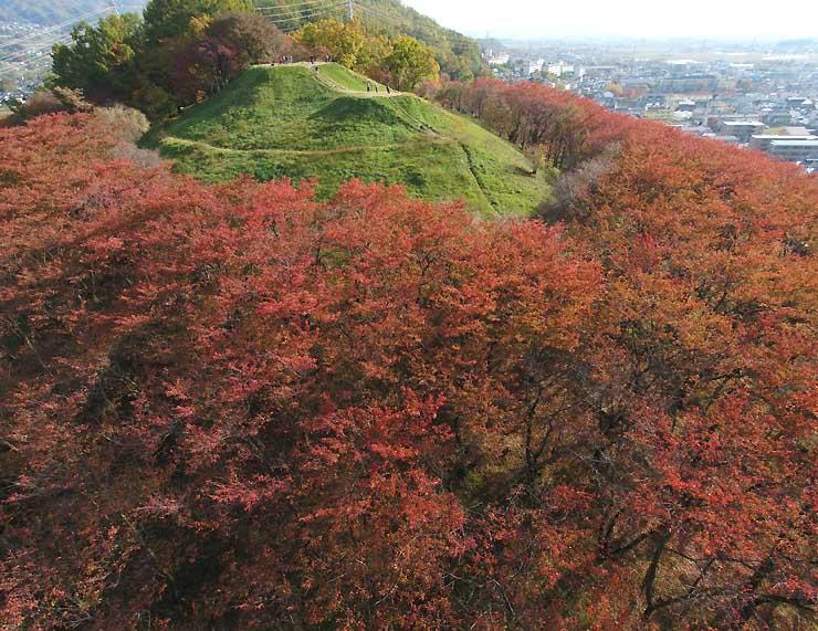 弘法山古墳を囲むように赤く色づいた桜=5日、松本市