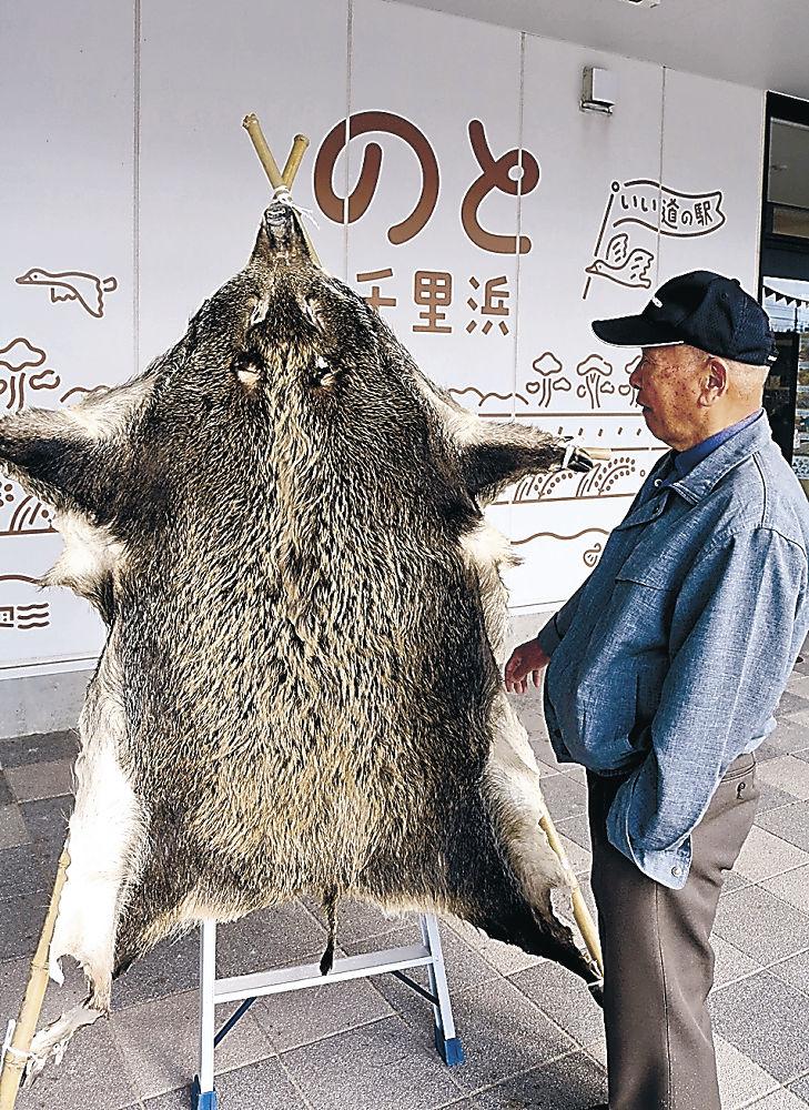 店頭に試験的に展示されたイノシシの剥製=羽咋市の道の駅のと千里浜