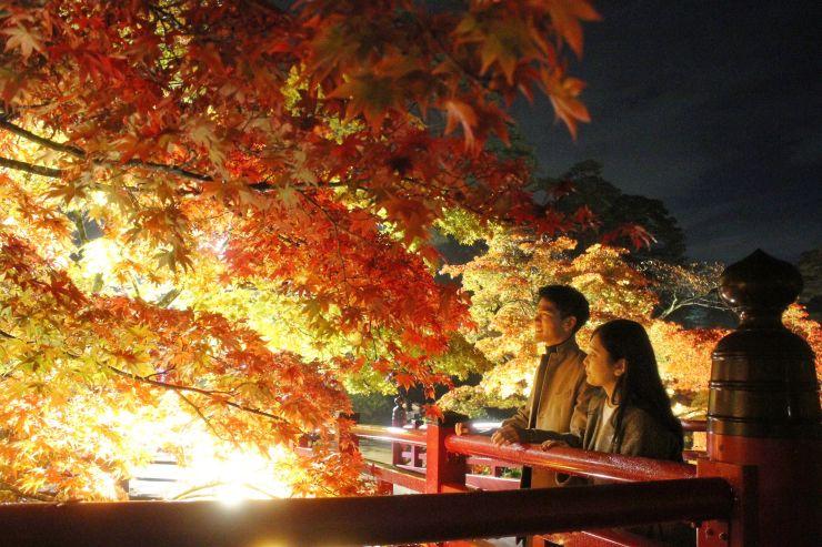 ライトアップされた「弥彦公園もみじ谷」=6日夜、弥彦村