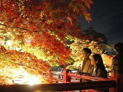 暗闇に映える秋の彩り 弥彦公園もみじ谷