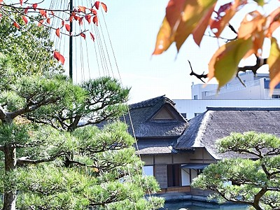養浩館庭園で雪つり作業始まる 福井、国の名勝