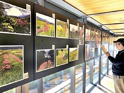 ヒガンバナ写真、投票で大賞決めて 若狭町の県年縞博物館