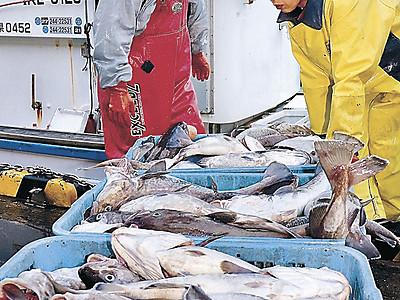 おいしい冬 輪島港でタラ初水揚げ