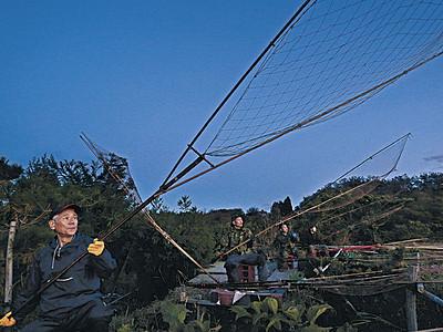 夕闇、カモ狙う 加賀・伝統の坂網猟 狩猟解禁