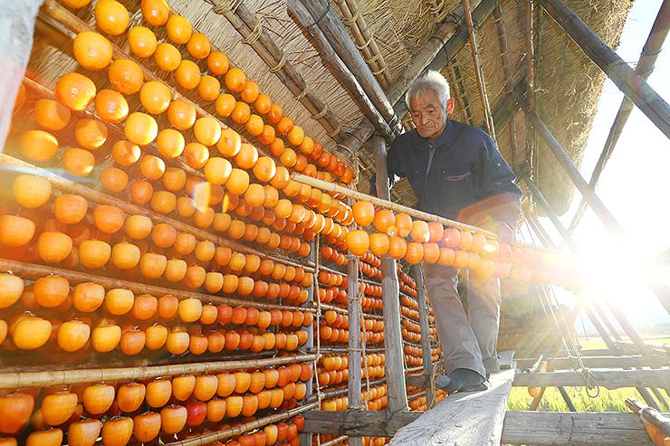 柿ハサに柿をつるしたさおを掛ける作業をする金山さん