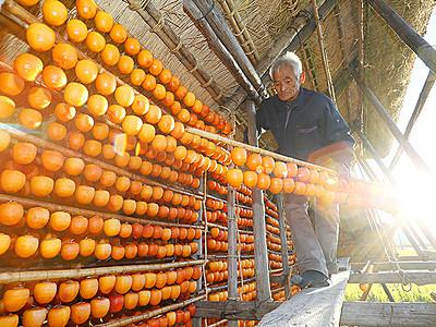 干し柿作り最盛期 福光