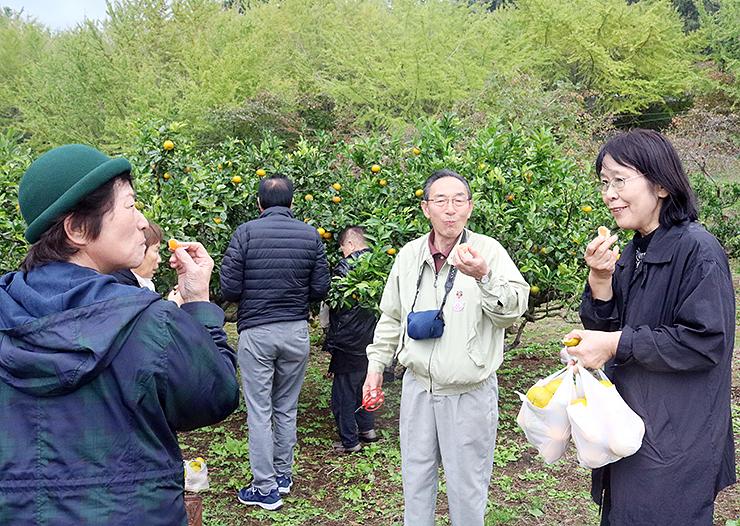 福井県内を巡るツアーでミカン狩りを楽しむ県内の参加者。多彩なプランがシニア層の心をつかんでいる