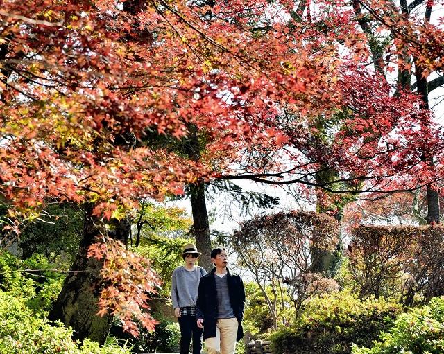 見頃を迎えている園内の紅葉=11月18日、福井県鯖江市西山公園