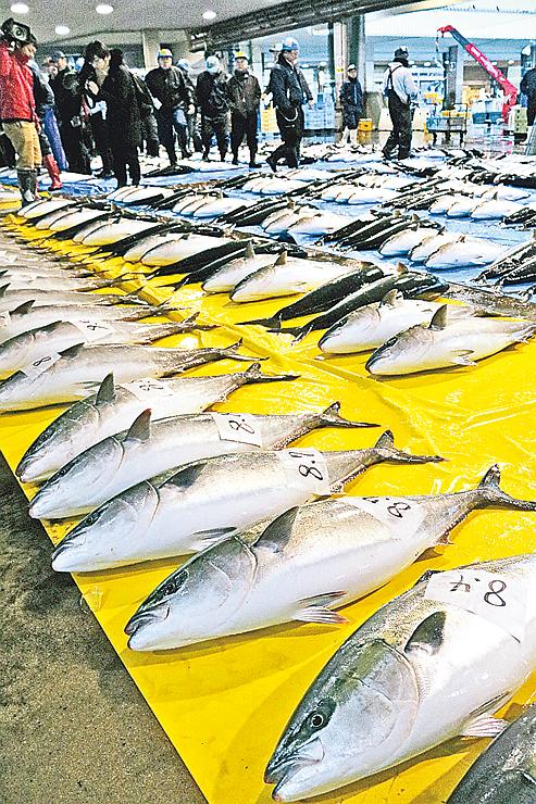 競り場に並べられたブリ=昨年12月2日、氷見魚市場