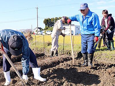 特産「丸いも」の収穫最盛期 黒部