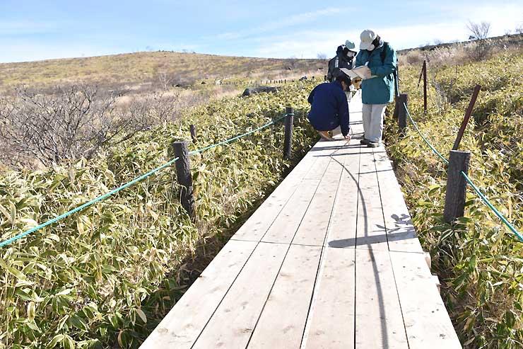 増設された木道の長さなどを確認する諏訪市教委の職員ら