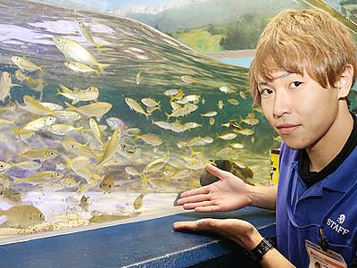 波の水槽大にぎわい! 魚津水族館に職員釣ったハゼ加わり400匹
