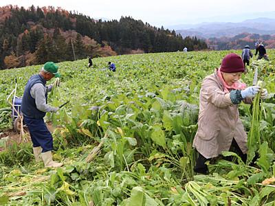「お菜とり」根強い人気 長野・中条でツアー
