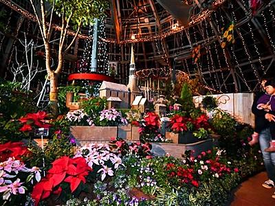 植物園はXマス色 1万球でライトアップ、坂井市