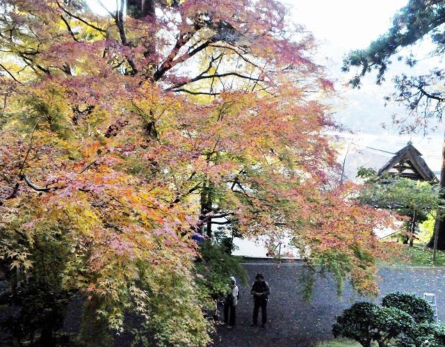 ヤマモミジの葉が色づく萬徳寺=11月27日、福井県小浜市金屋