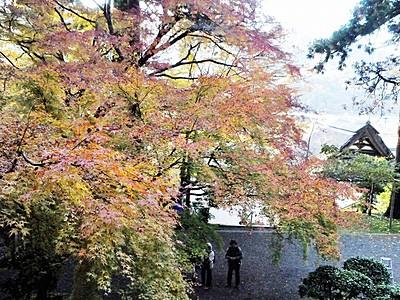 小浜の萬徳寺、ヤマモミジ見頃 日本の紅葉百選