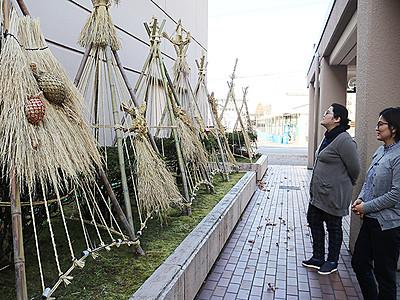 雪吊りにわら細工 砺波市文化会館の前庭 お年寄りが手作り