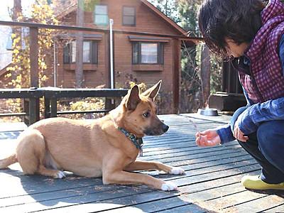 「看板犬」3位、信濃町にいます 楽天トラベルランキング