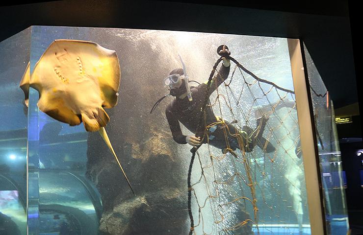 富山湾大水槽に網を設置する職員=魚津水族館