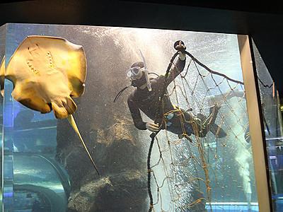 ブリよ止まれ、水槽衝突防止へ魚網 魚津水族館