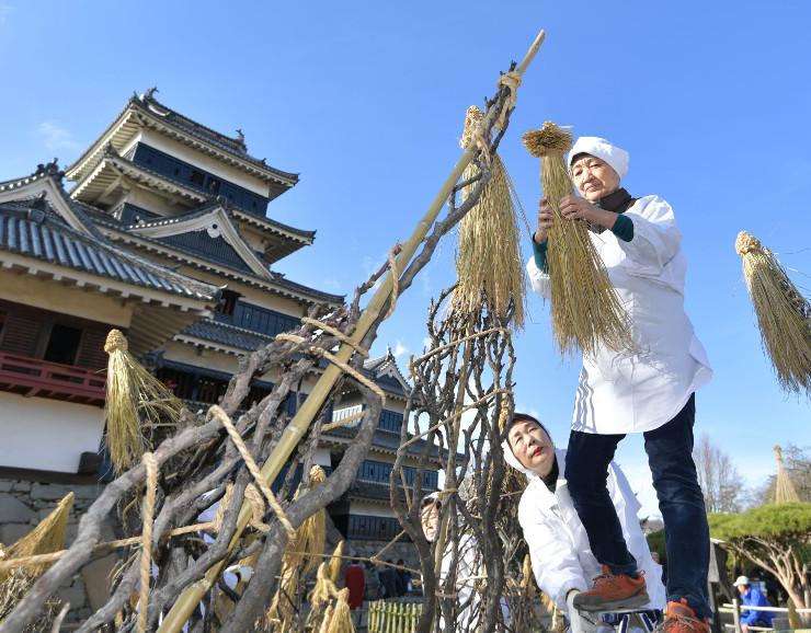 わらぼっちを木にかぶせる松本古城会員=1日午後2時すぎ、松本市の松本城本丸庭園