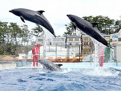 イルカとツリー作ろう 坂井・松島水族館、25日までショー