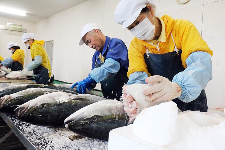 大きなブリに塩をすり込む従業員=魚津市持光寺のヨ八魚問屋