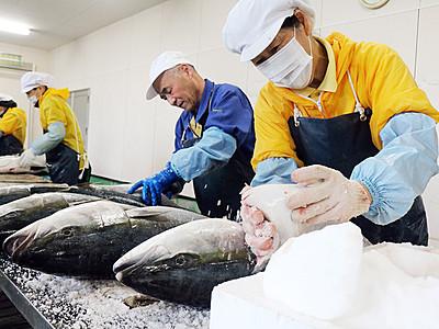 塩ブリ作り最盛期 魚津の魚問屋