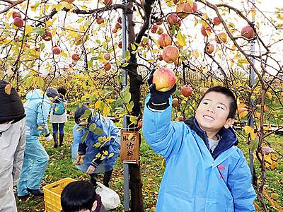 マイリンゴ収穫に笑顔 魚津・オーナー制度最終回