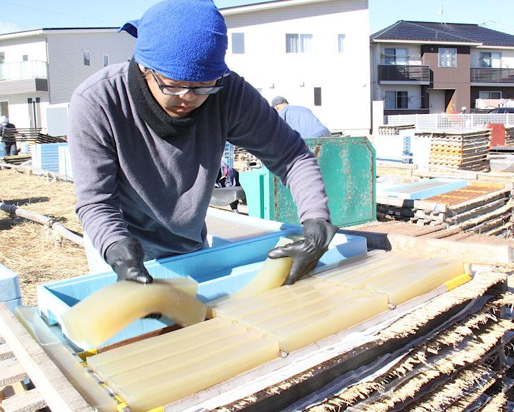 茅野市で始まった「天出し」の作業。生寒天が崩れないよう、丁寧に台に載せた=8日