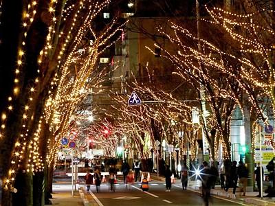 冬空包む光温か 新潟・けやき通り