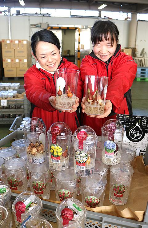 開発されたミニ水耕栽培キット=県花卉球根農業協同組合