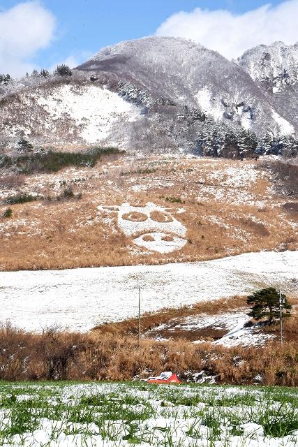 雪で白く染まった牛の顔のアート=12月14日午後1時ごろ、福井県大野市南六呂師