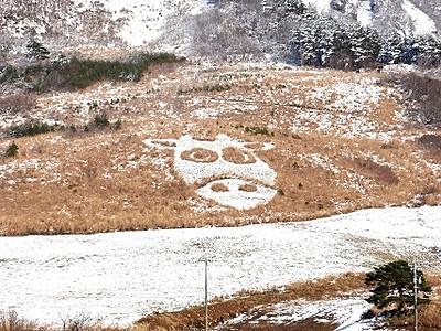 牛顔アート、雪化粧 まん丸お目々愛らしく 大野・六呂師高原