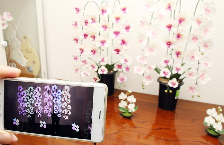 白い造花(奥)をスマートフォンでフラッシュ撮影すると6色に変化して見える(手前)