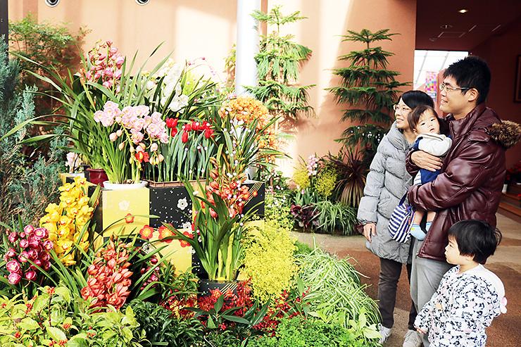 新春の華やかさを演出する花々=チューリップ四季彩館