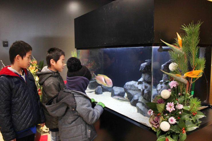 2019年の干支の「亥」にちなんだ魚を眺める子どもたち=31日、上越市