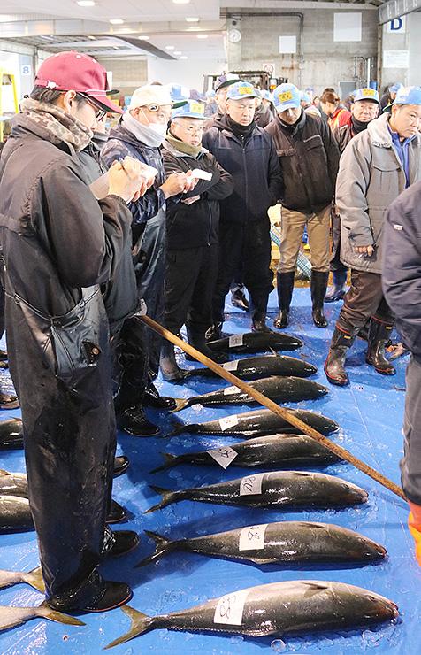 初競りに並ぶブリ=氷見魚市場