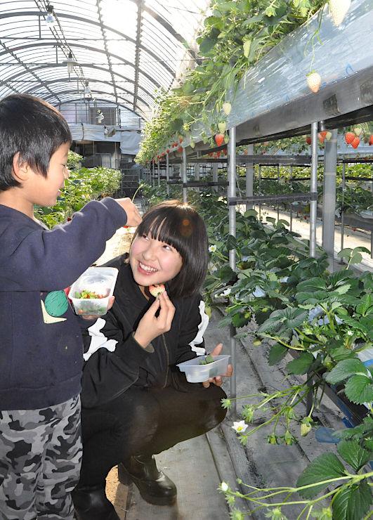 塩田東山観光農園のハウスでイチゴ狩りを楽しむ来場者