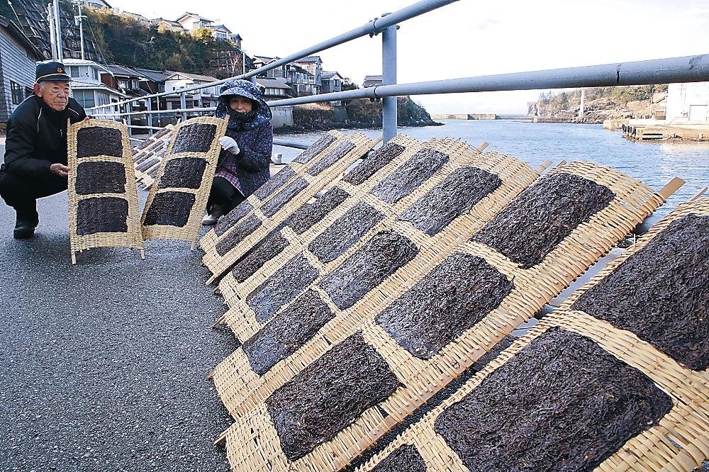 港の前に干される岩ノリ=志賀町福浦港