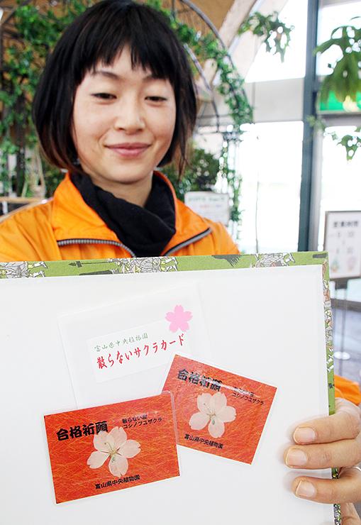 コシノフユザクラを押し花にしたカード=県中央植物園