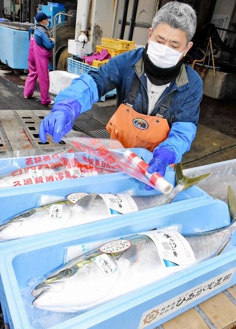 徹底した下処理を加えおいしさに磨きを掛けた「ひるが響」。出荷がピークを迎えている=1月10日、福井県美浜町日向漁港