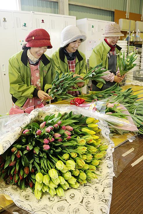 チューリップ切り花の出荷作業=昨年12月、砺波市の権正寺営農組合