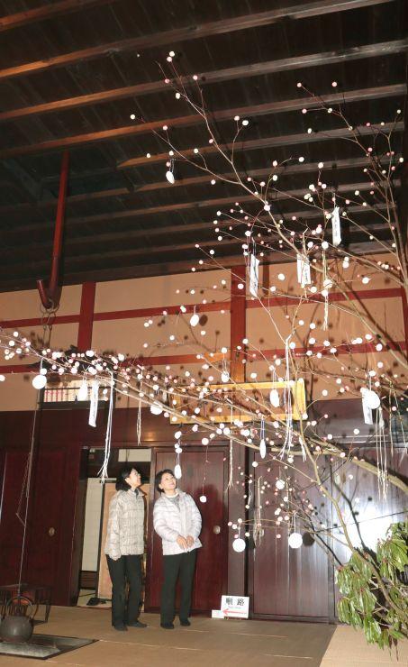 渡辺邸に飾られている「団子の木」=関川村下関