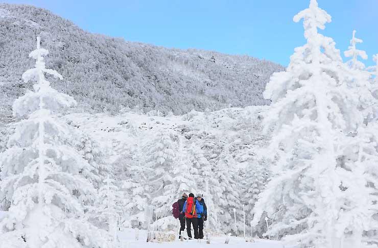 氷と雪がつくりだした銀世界が広がる溶岩台地の坪庭