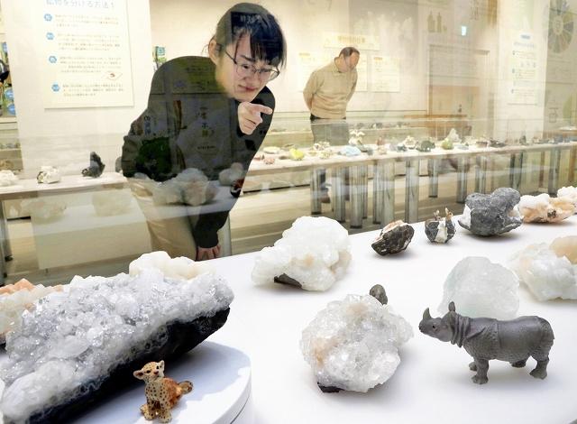 収集した鉱物や動物のフィギュアが並ぶ特別展=福井県福井市の県立こども歴史文化館