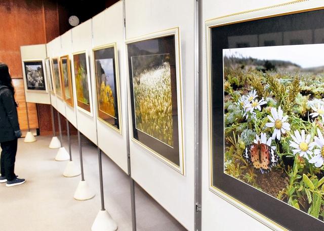 宮さんの精緻な植物写真が並ぶ作品展=2月1日、福井県越前町の福井総合植物園プラントピア