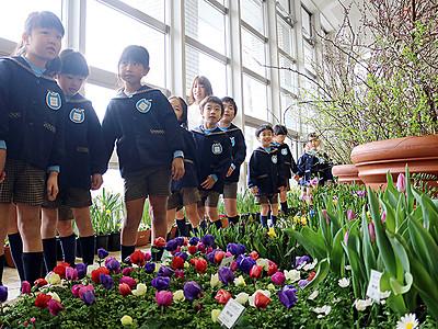 華やかに春を先取り 砺波・県花総合センターで花まつり