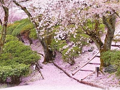 鯖江・西山公園、桜PRポスター完成 福井