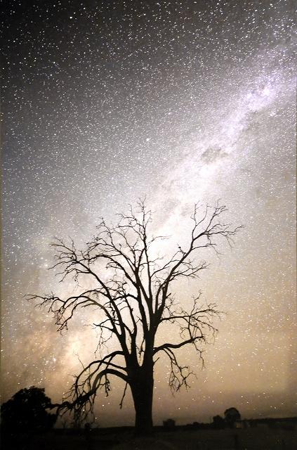 樹木のシルエットと天上の天の川の対比が印象的な写真
